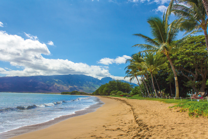 beautiful beach, ocean, palm trees, mountain, paradise