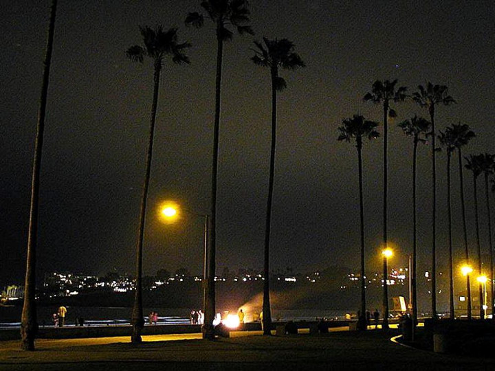 night time beach, palm trees, ocean