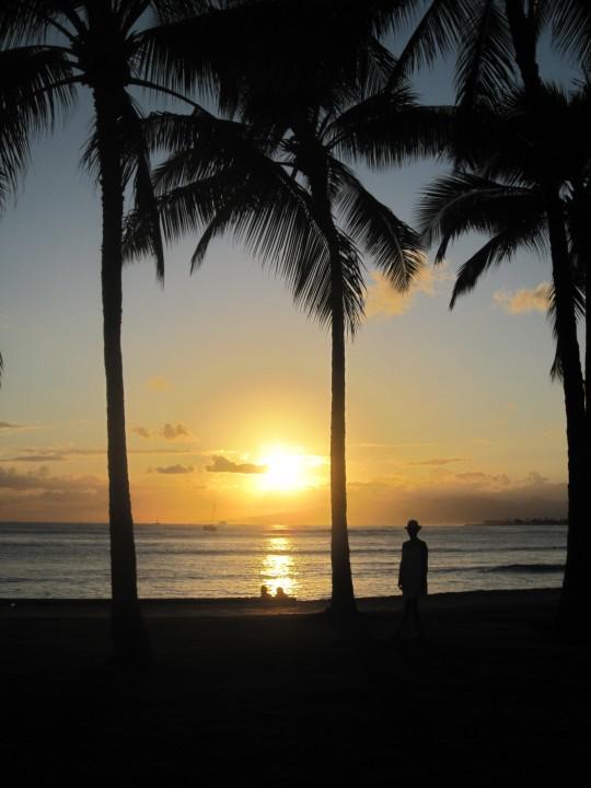 beach, sunset, palm trees, ocean, waves