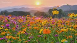 Spring, flowers, warm weather, mountains, sunset, fresh air