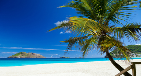 beach with a palm tree in St.Barths, French West Indies