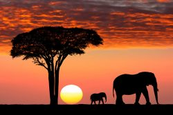 African safari, travel, elephants