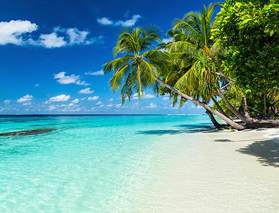 tropical beach vacation, ocean, palm trees, sand, peaceful