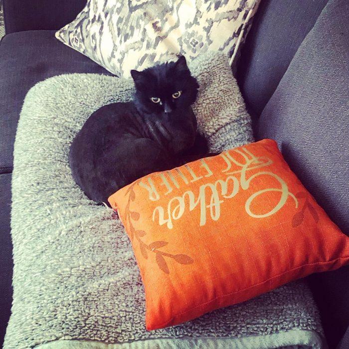 Black cat, good girl, kitty,