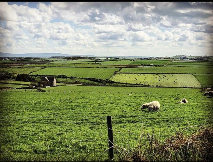 Giants Causeway, Ireland, vacation, green, sheep