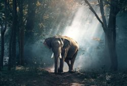 Elephants, travel, world travel, dream vacation
