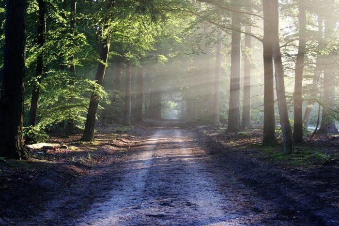 beautiful, hiking path