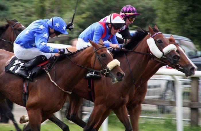 Horses, Horse racing, Sport